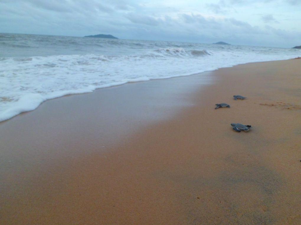 un été en Guyane