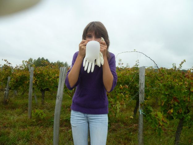 Album - vendanges 2011