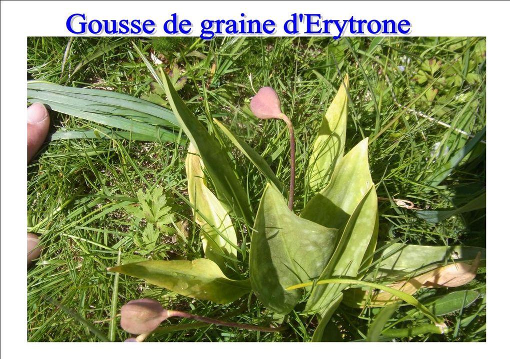 Belle balade découverte en Aubrac fin Mai 2015...