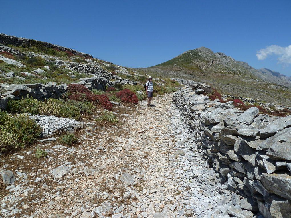 Après notre pause, nous reprenons le chemin de pierres, de cailloux, quelques Mauves Sylvestres (Malva Sylvestris) ont trouvé de quoi étaler leur beauté...