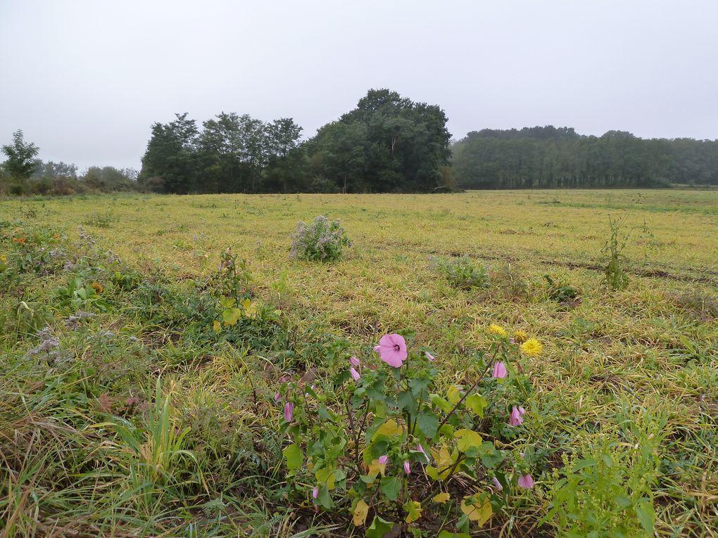 Traversée de la Plaine des Sablons par le GR1B.