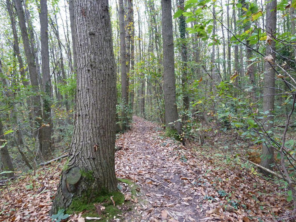Petit sentier (GR) en crète au lieu dit Les Biaunes, dans la Forêt régionale des Buttes du Parisis.