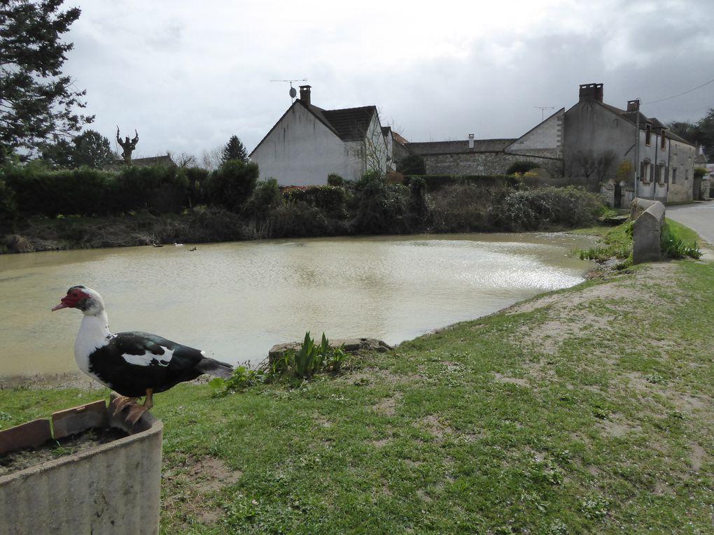 Mare (aux canards) au hameau du Mesnil.