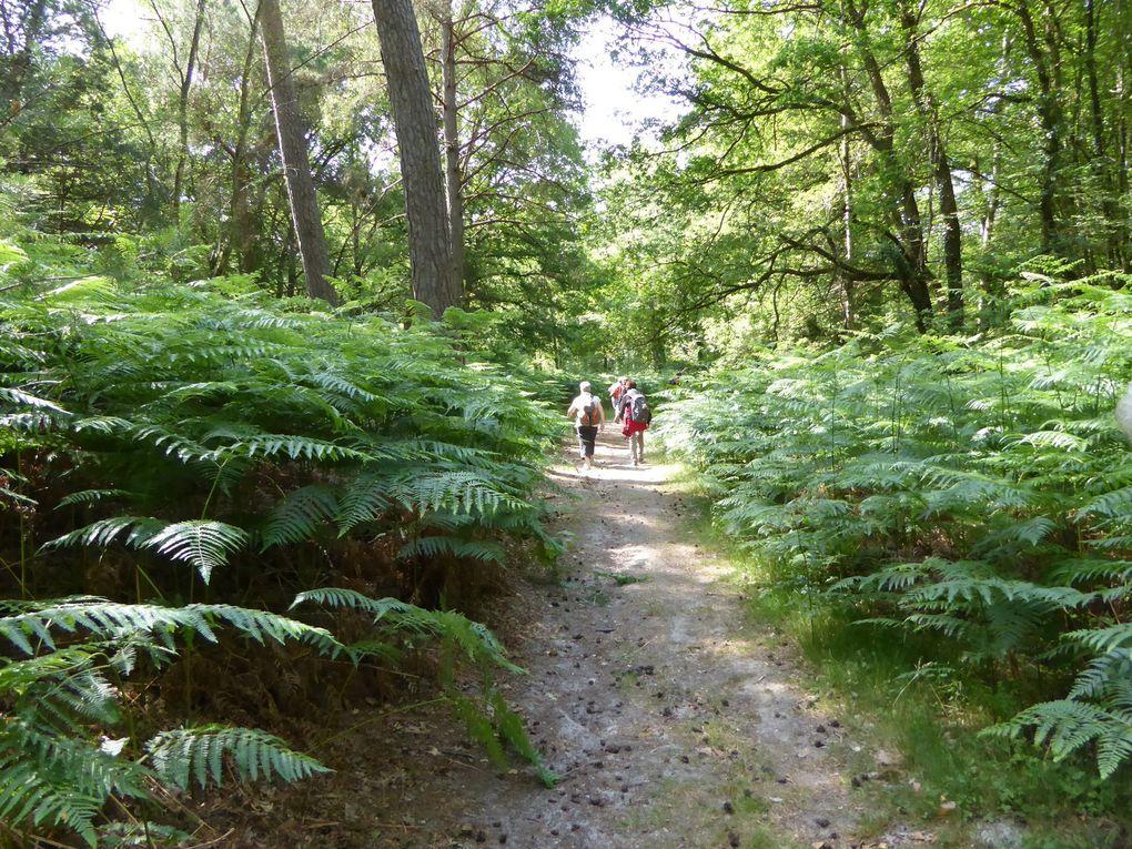 Randonnée en boucle de Dourdan - 23 km.