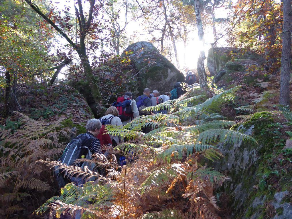 Randonnée de Bois-le-Roi à Thomery - 23 km.