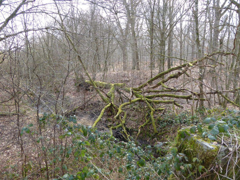 Randonnée, boucle du Perray-en-Yvelines. 21,5 km
