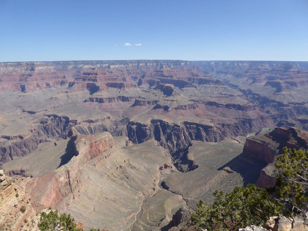 Ouest-Américain, Grand Canyon - Printemps 2016.