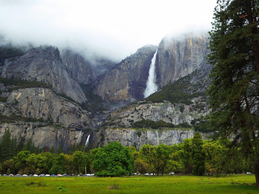 Ouest-Américain, YosemiteNP - Printemps 2016.