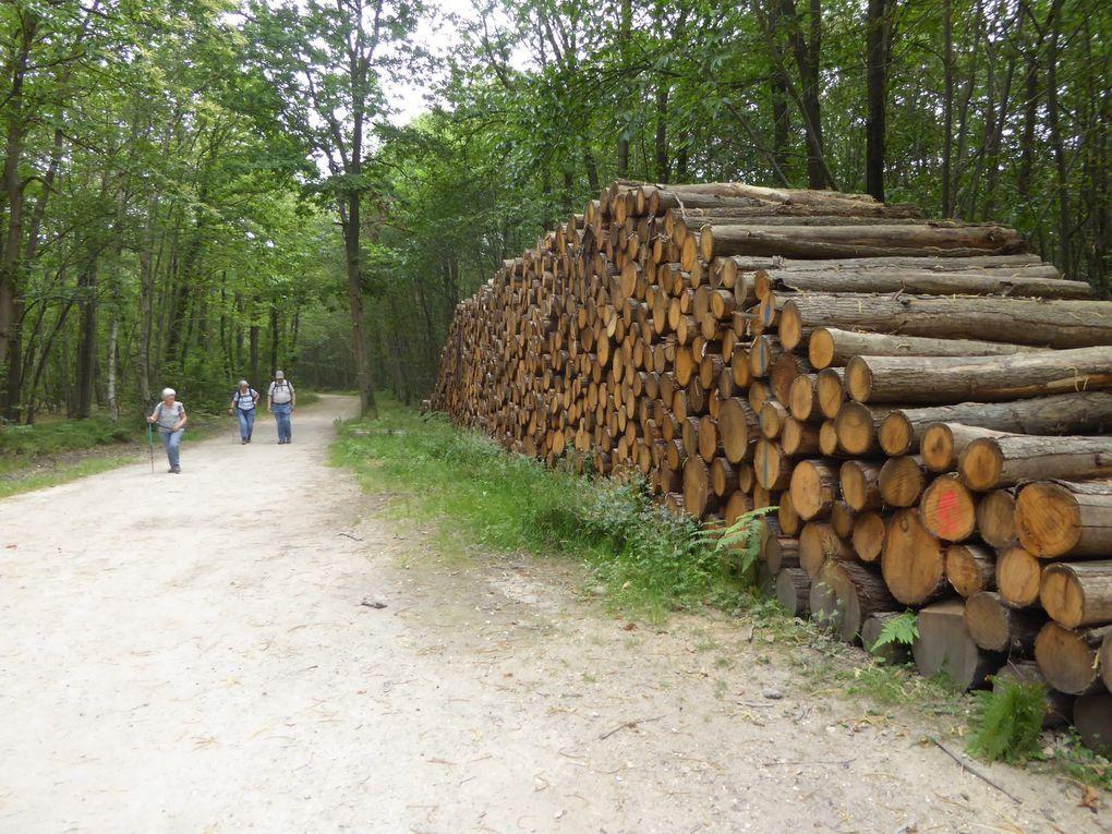 Randonnée de Bouffémont à Taverny. 15,8 km.