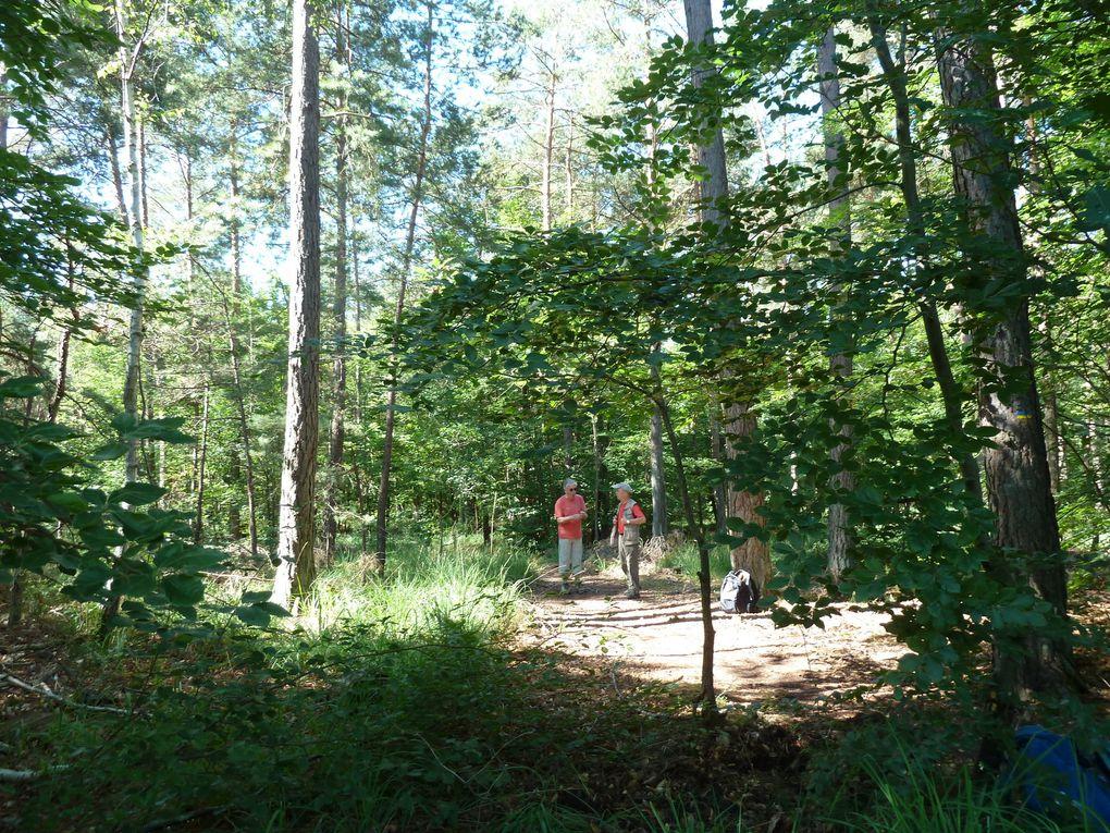 Randonnée en forêt de fontainebleau - 16,3 km.