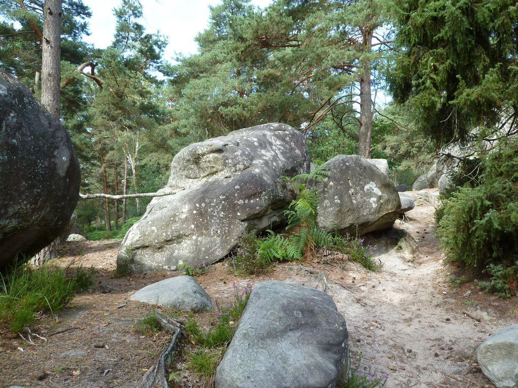 Randonnée en forêt de fontainebleau - 16 km.