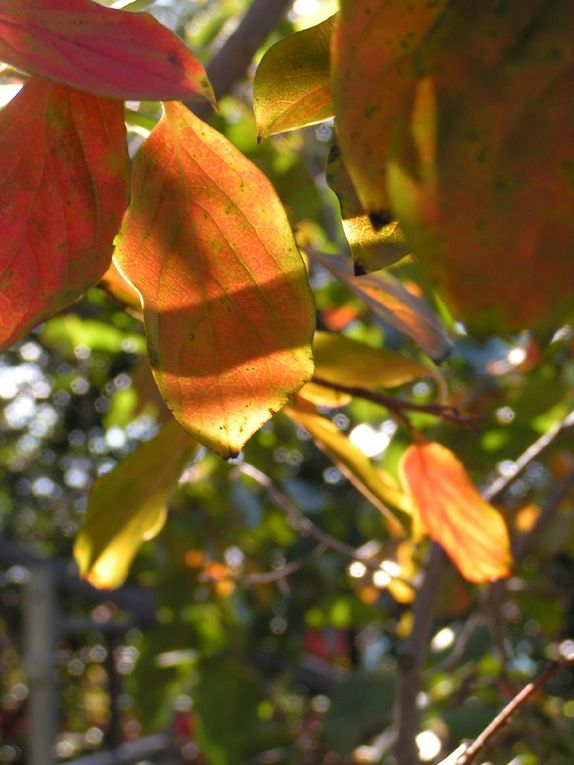 Des feuilles au soleil....