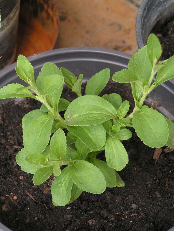 Mes nouvelles plantes...