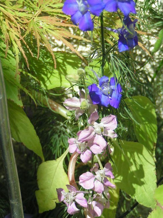 Fleurs annuelles...