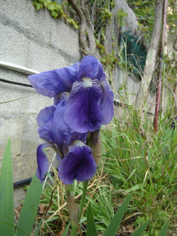 Celui là est d'un violet clair....