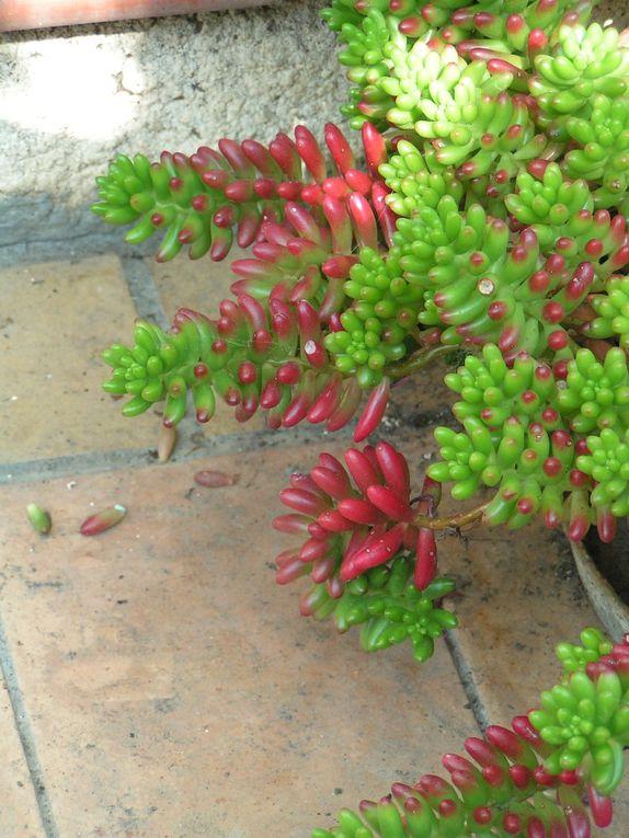 plantes grasses .... 2 .....