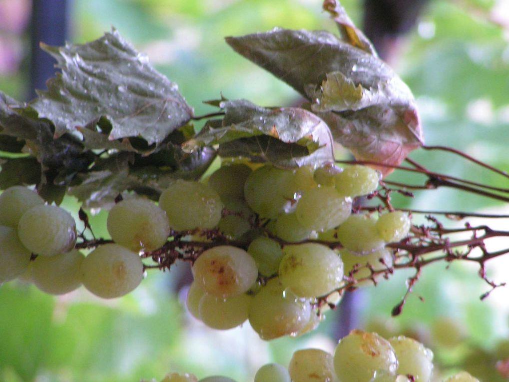 Les raisins....