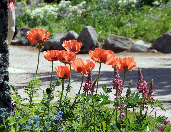 Jardin Botanique du haut Chitelet (diaporama)