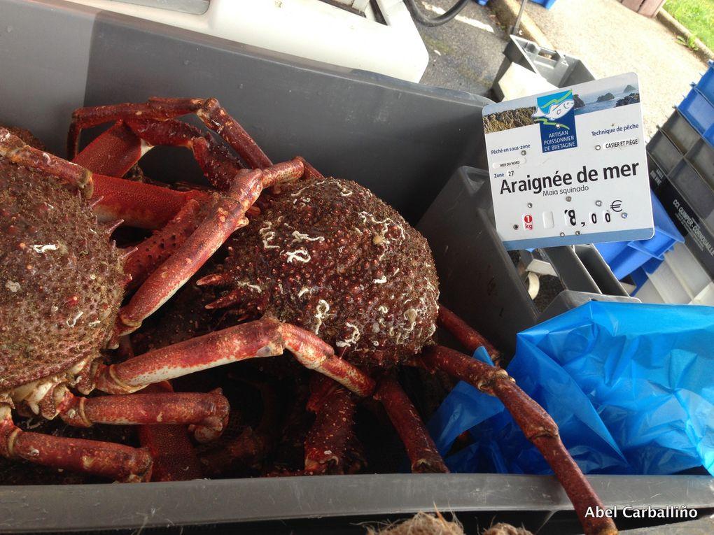 Poissons et crustacés. Marché en Finistère.