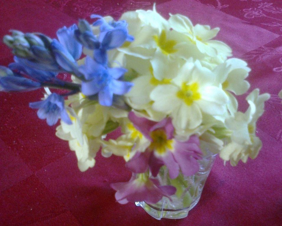 Un beau bouquet de primevères pour maman