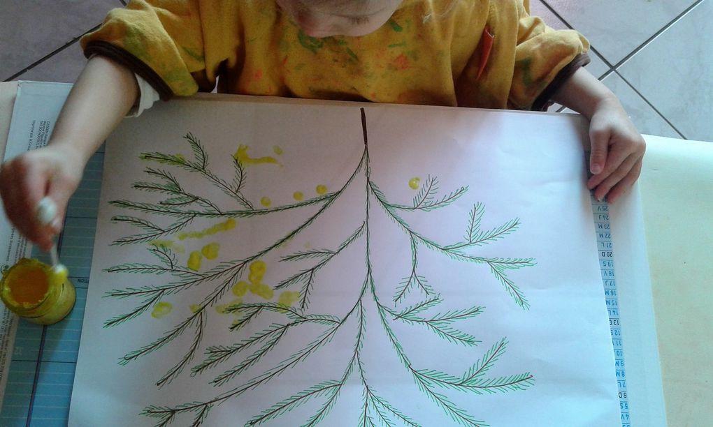 Une belle branche de mimosa