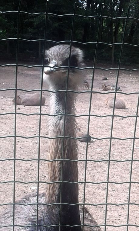 Une agréable sortie au parc Zoologique de Jurques