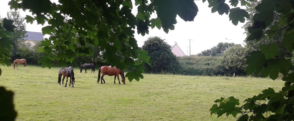 Petite promenade à la campagne