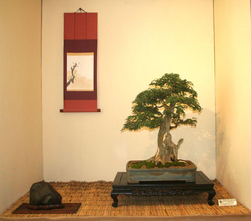 """Villa Chanteclerc """"bonsai, culture du beau"""" en hommage à Jean-Paul SOÏME"""