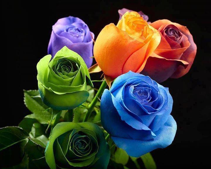 notre amie La Rose....