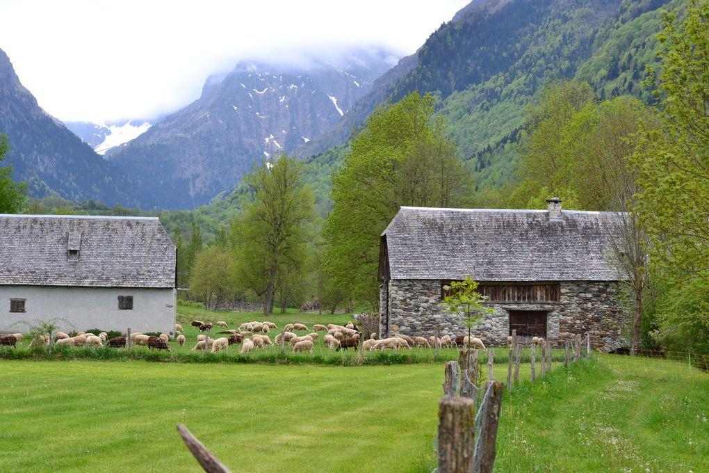 Toutes les photos  par liber-t , le village de Loudenvielle , l'aire pour camping-car , la montagne , le lac , les moutons , les vaches .
