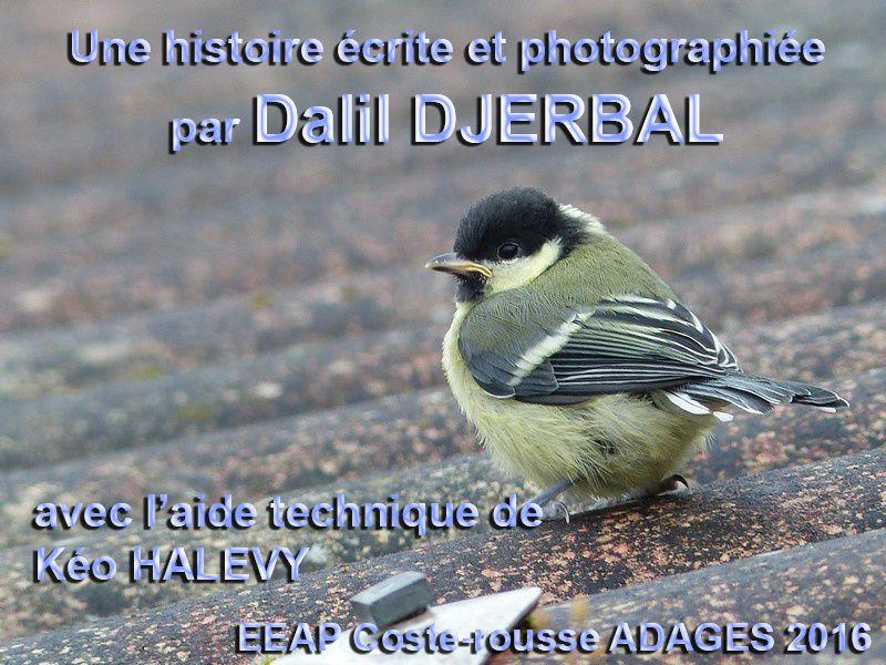 Albums Accessibles Adaptés : Dalil et Kéo ...
