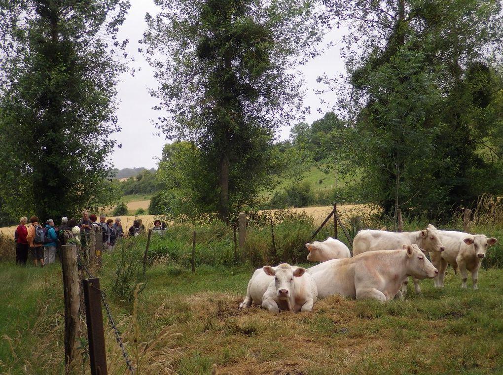Quand un troupeau rencontre un autre troupeau ...