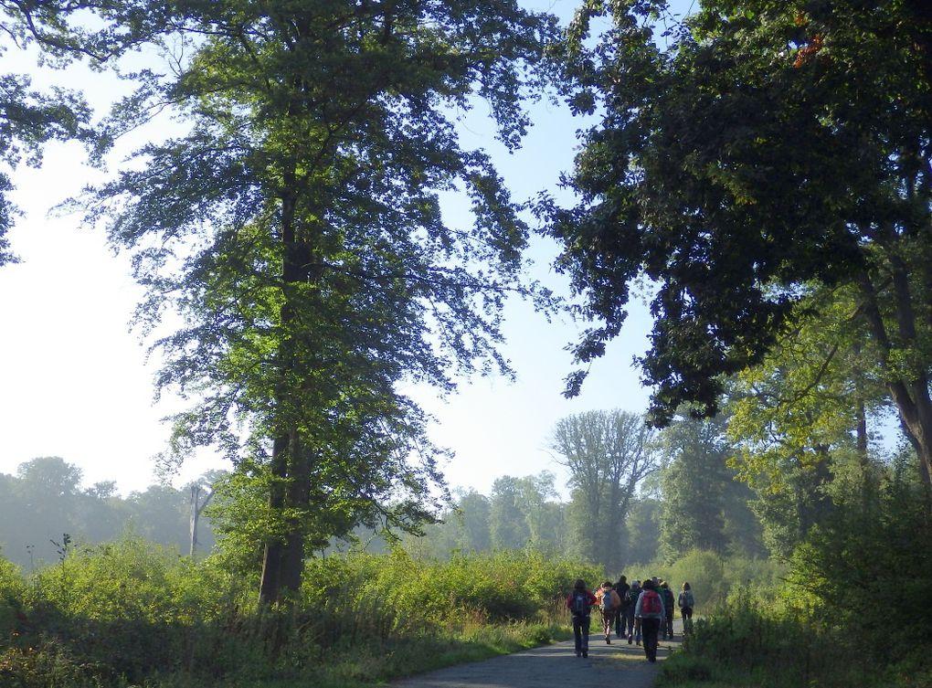9/9/2015 -  Forêt de Marly