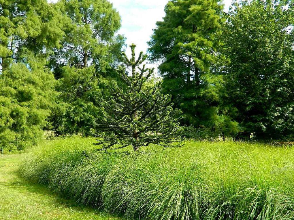 """Des """"désespoirs des singes"""" des néfliers et autres plantes aquatiques dans l'arboretum."""