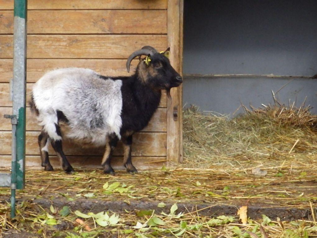 Les animaux du Parc Corbières