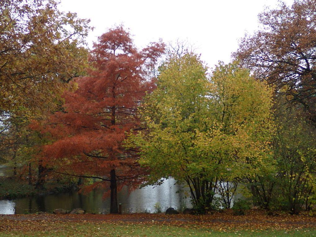 """On découvre le """"Grand Lac des Ibis"""""""