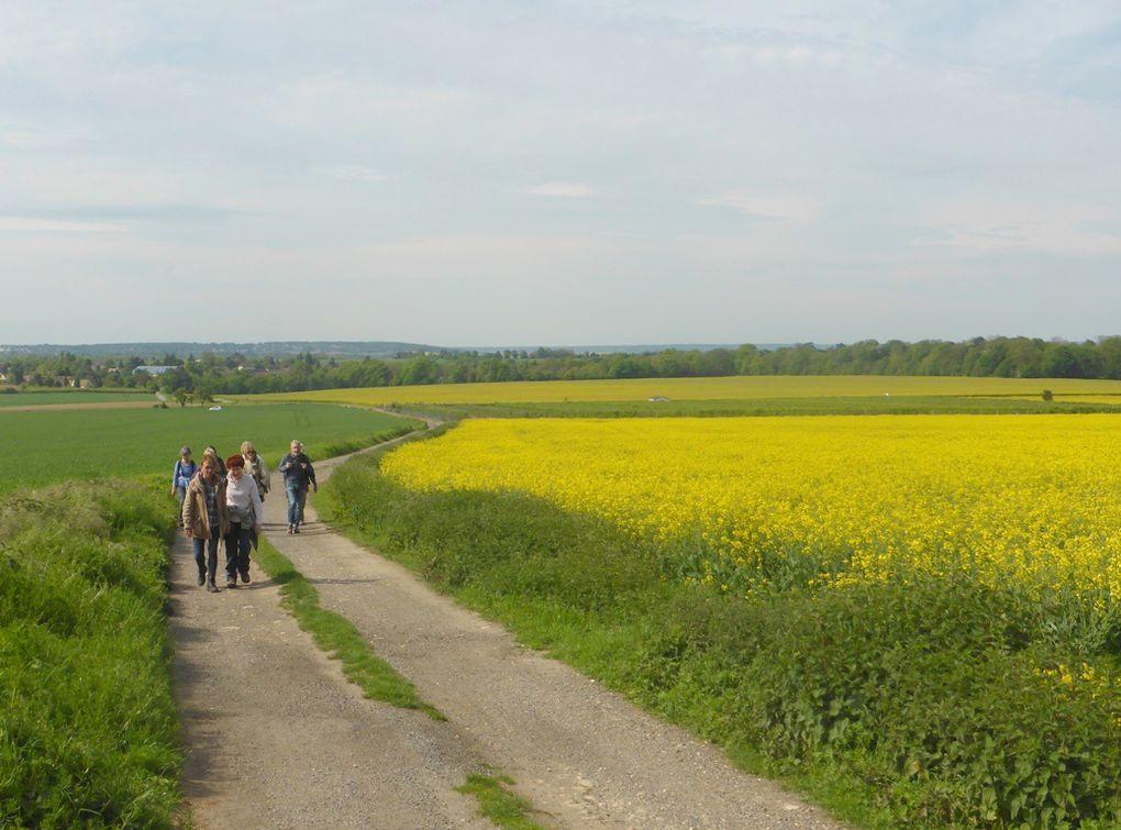 puis les champs de colza et de blé