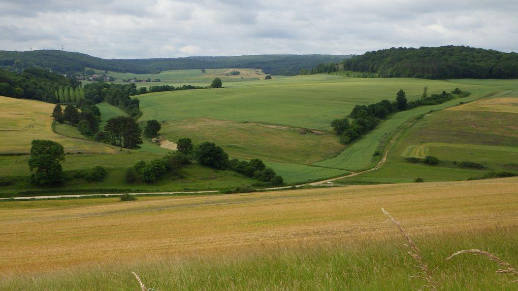 Le village de Clémencey et les champs de bleuets