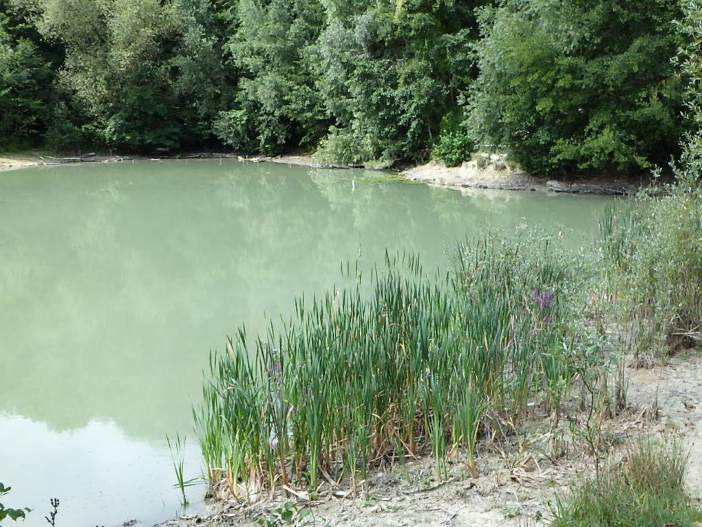 Sous l'oeil inquiet de ce crapaud, le tour du Lac Bleu et celui du Petit Etang