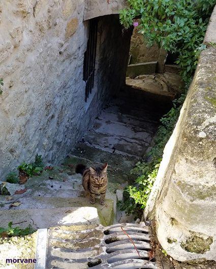 Partout des escaliers prometteurs de découvertes. Ici, l'appareillage des pierres et galets donne au mur un air de chef d'oeuvre.