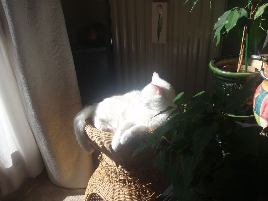 mon premier bain de soleil