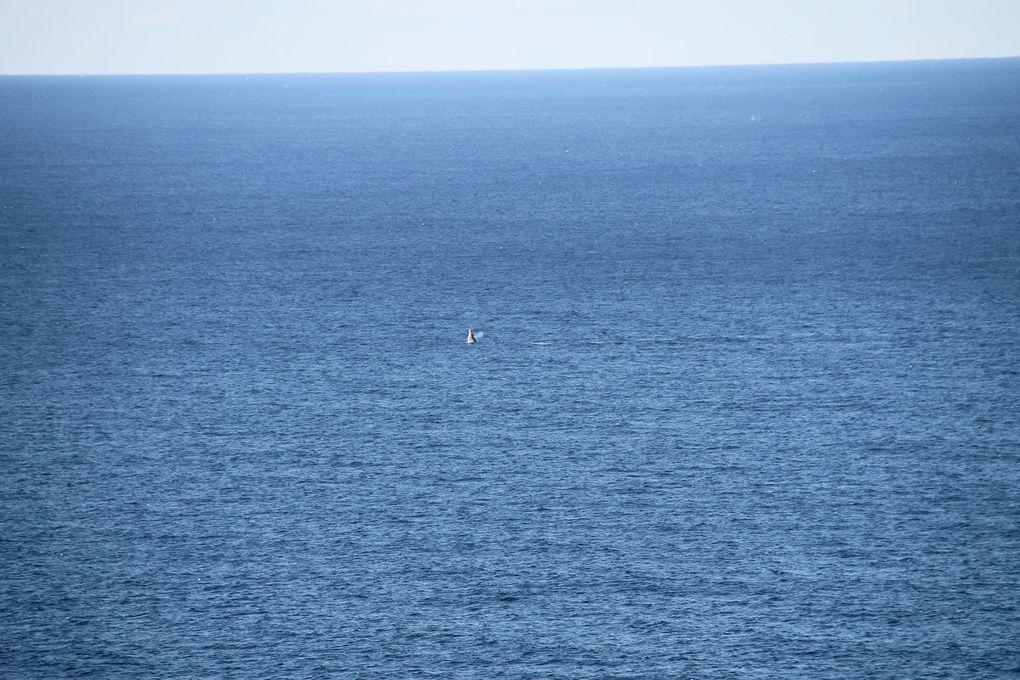 Détente, baleines et Cape Byron