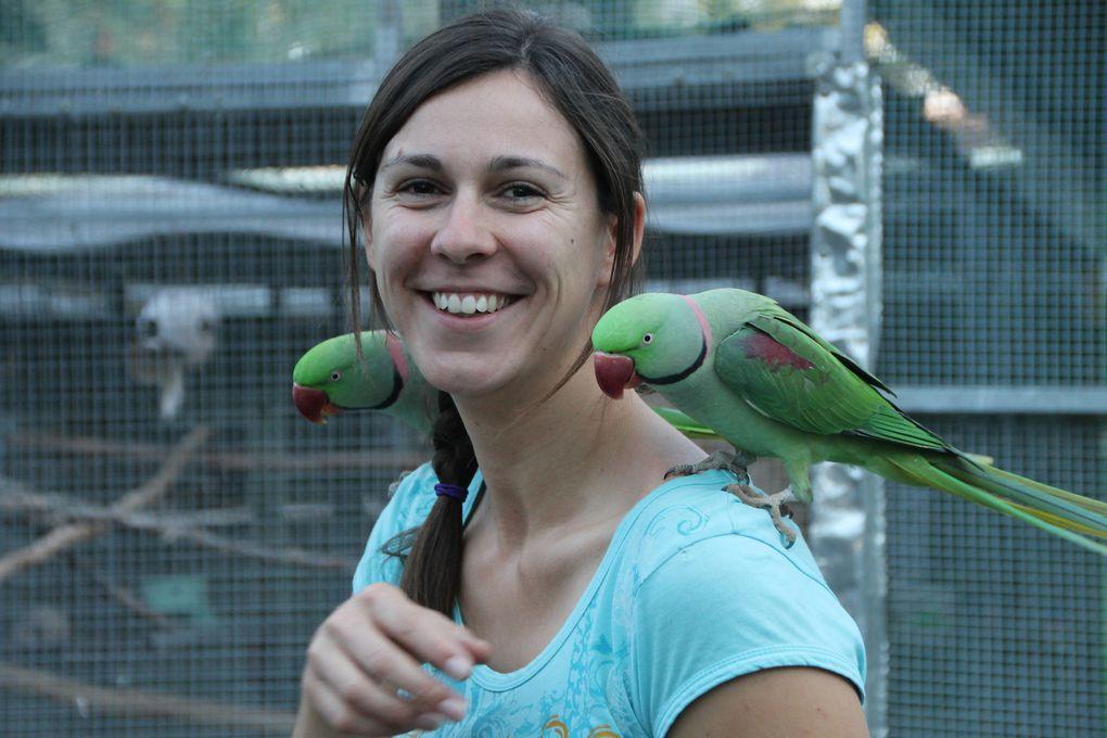 Parrots in Paradise