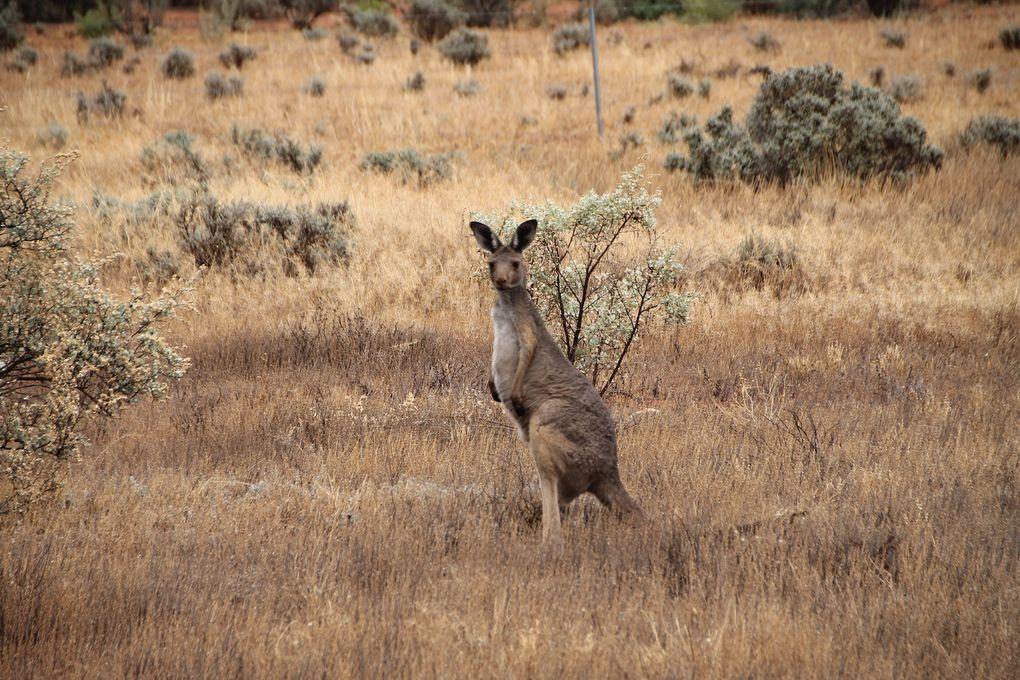 De Cobar à Broken Hill