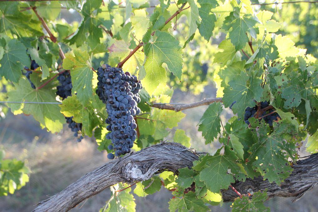 La vie dans les vignes !