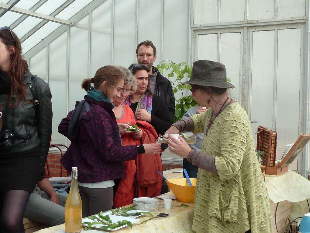 Animation plantes sauvages comestibles dans le cadre du festival du Rhododendron des 10 et 11 mai