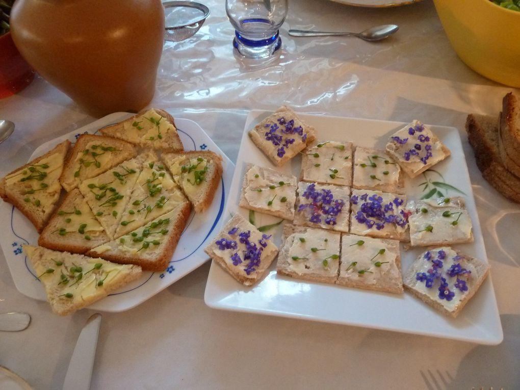 feuilleté ou gâteau de Primevère à la Clotilde Boisvert, Assiette Benoît création de crosses de fougère aigle, toasts de Porcelle enr, la traditionnelle tarte aux orties, cake à la Berce confite, respounchous de Tamier, salade de Violette et autres toasts de Lierre terrestre
