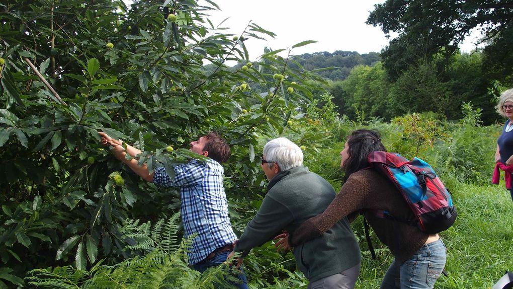Et sur toute l'année, l'atelier découverte des plantes sauvages et de leurs usages de la MPT Ergué Armel de Quimper que j'ai toujours autant de plaisir à animer : sorties botaniques à Port Launay, Ste Anne de la Palue, Locronan, Plounéour-Lanvern, Odet ou fruits sauvages à Châteauneuf du Faou, ou atelier cuisine de plantes sauvages avec une soupe de Berce ou autres préparations médicinales.