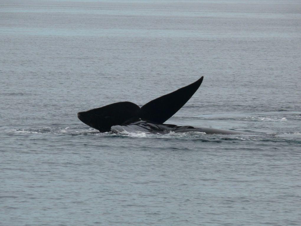 Valdes et ses Baleines