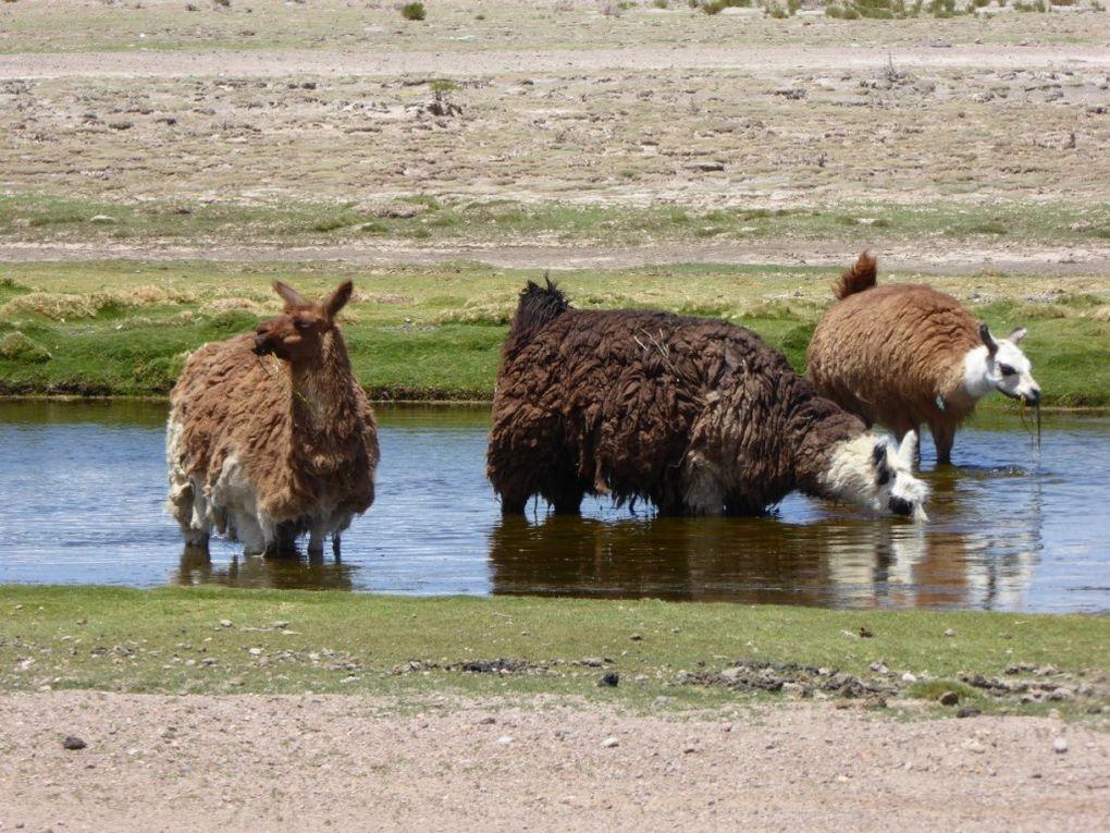 San Pedro d'Atacama à Uyuni